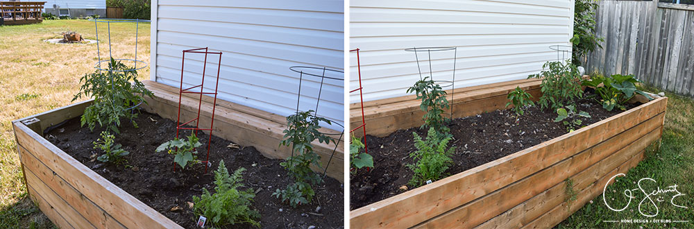 Do you plant a fruit, herb or veggie garden? Today I'm sharing what vegetables we planted in our raised garden beds and giving updates on their progress.