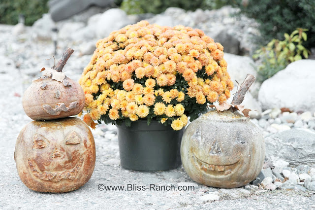 Bliss Ranch Concrete Pumpkins
