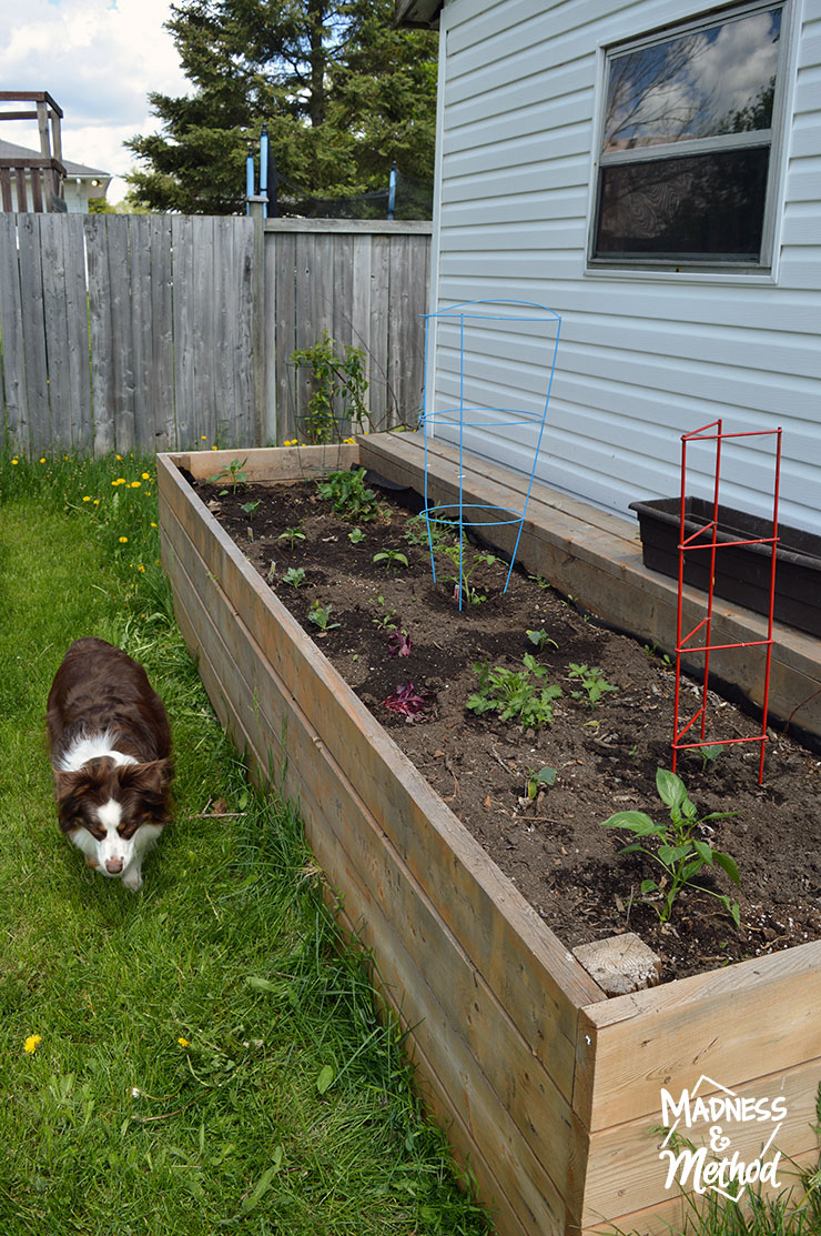 raised-garden-veggie-placement-08