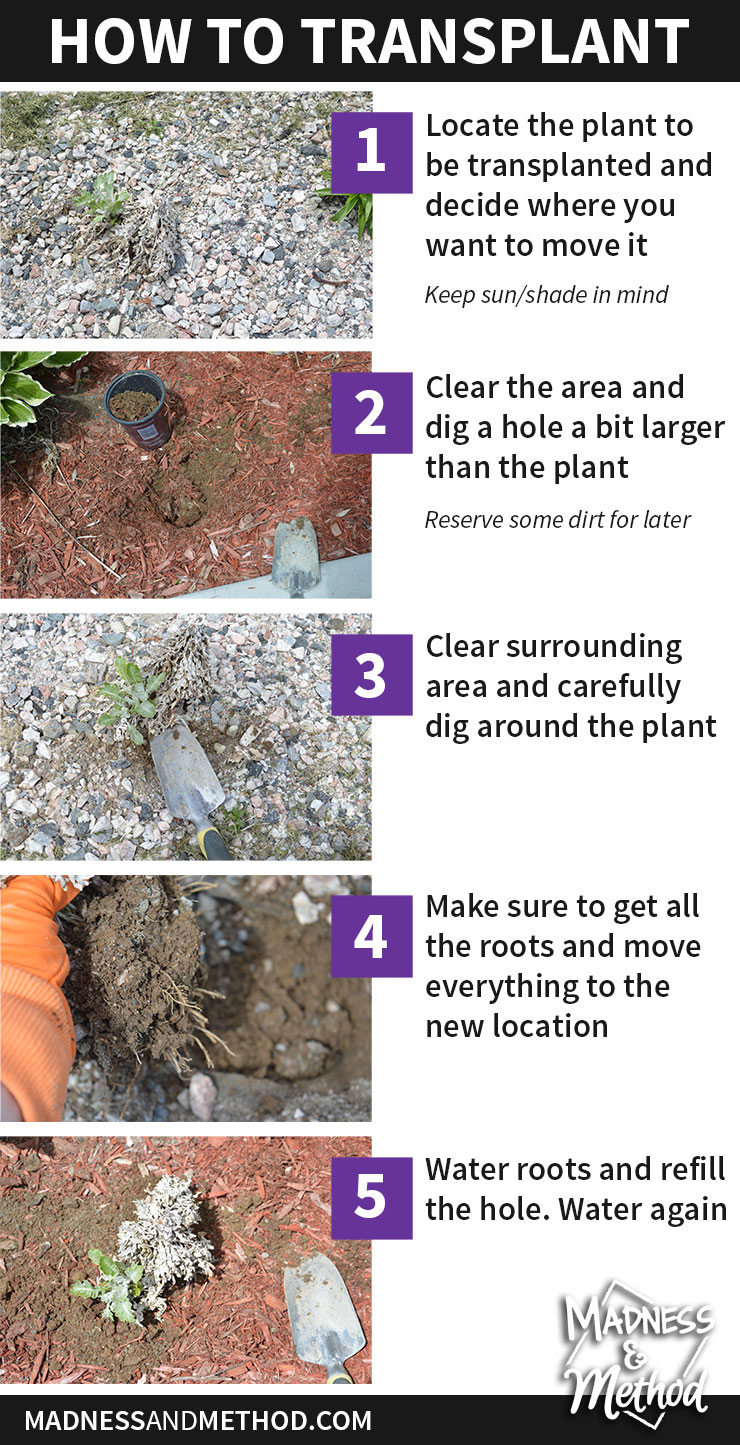 new-plants-and-transplanting-03-howto