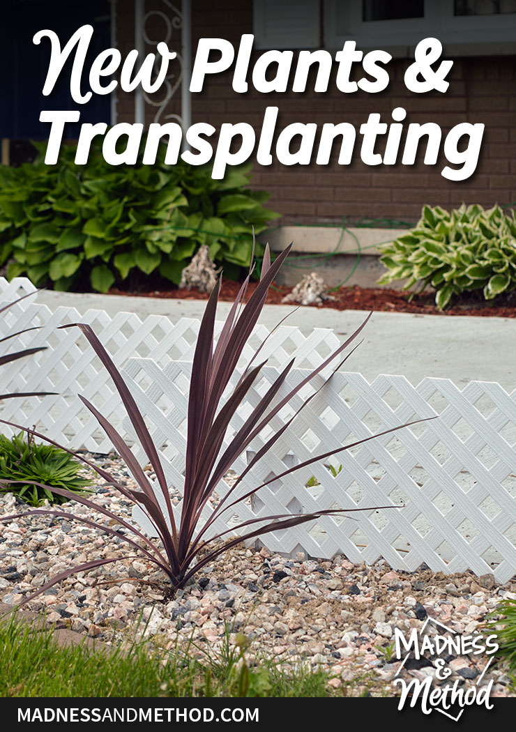 new-plants-and-transplanting-pinterest