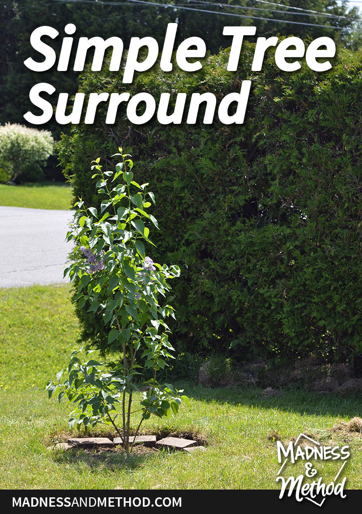 simple-tree-surround-pinterest