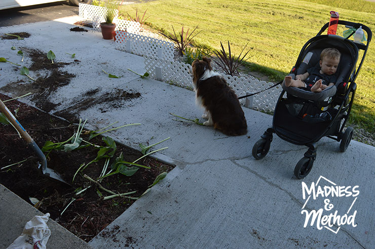 Dog and baby on front walkway