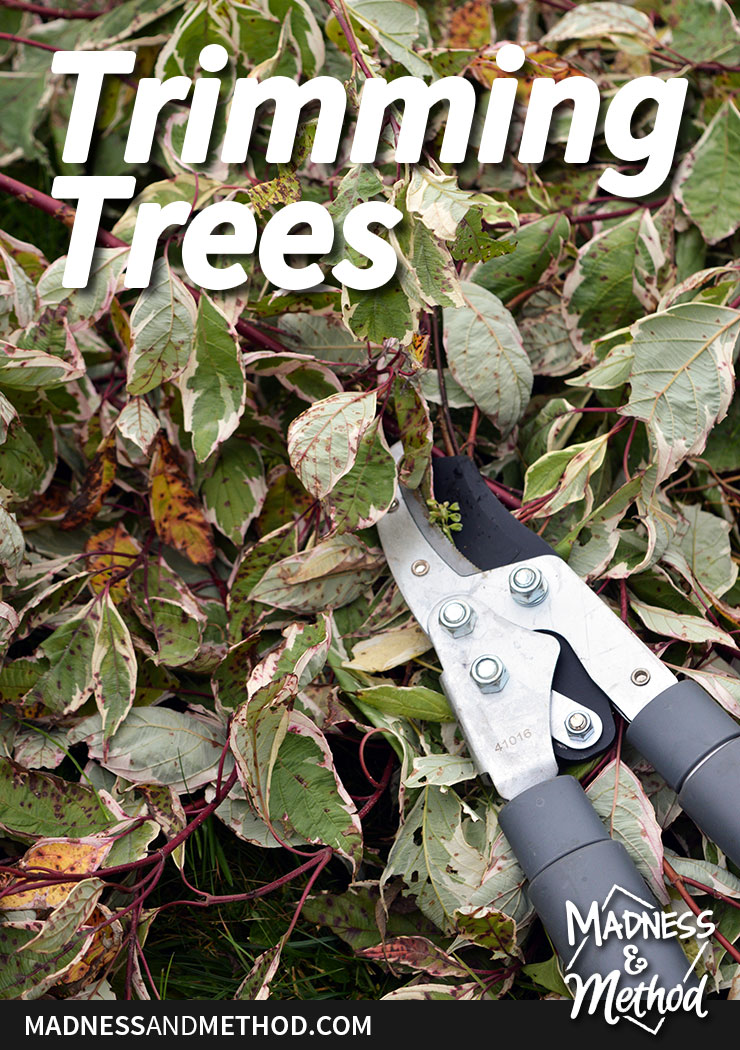 trimming trees graphic with shears