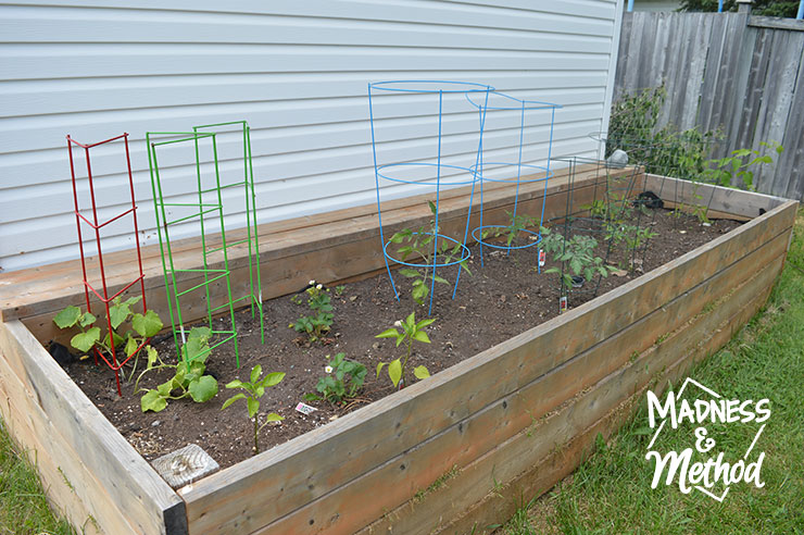 east side raised garden bed