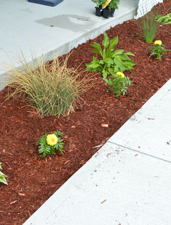 front garden with red mulch