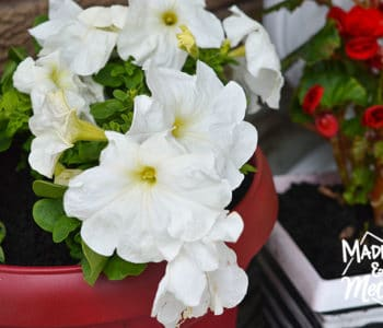 red planter with white flowers