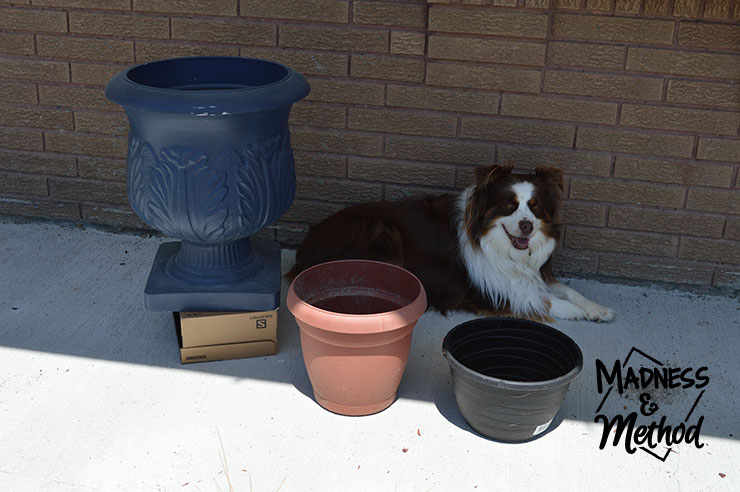 planters and dog