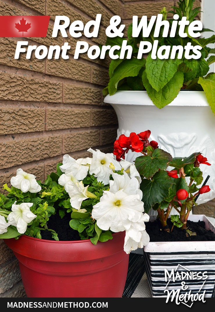 red and white front porch plants for canada day