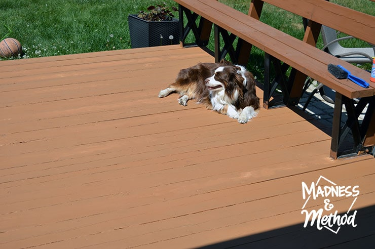 dog laying on deck