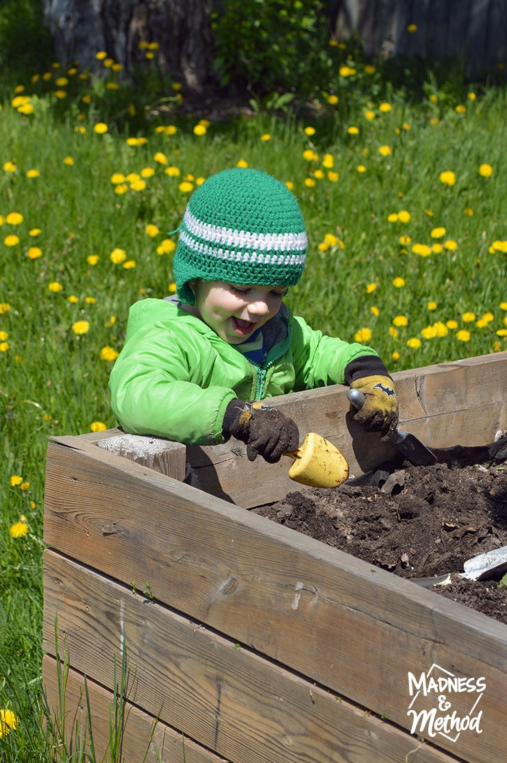 toddler in raised garden bed