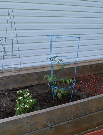 raised garden prep