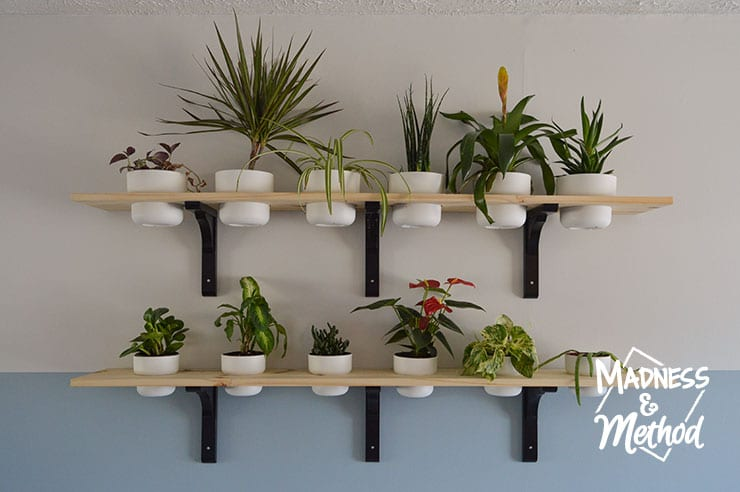 plant shelves diy