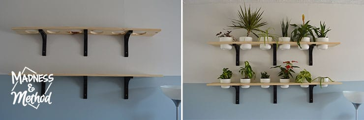 shelves with and without plants
