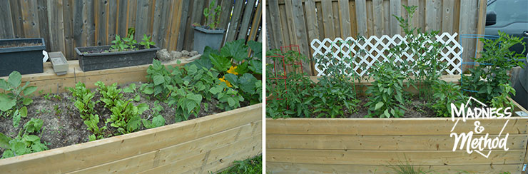 garden beds filled with veggies
